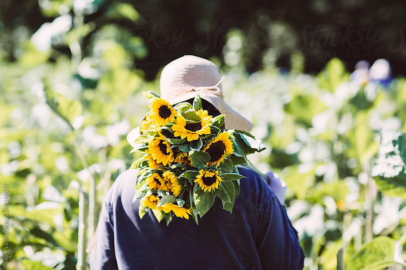 Woman walking in field carrying sunflowers by Lior + Lone for Stocksy United