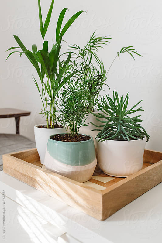 Modern planters and greenery sitting on wood try by Carey Shaw for Stocksy United