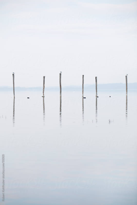 Poles in water by Robert Kohlhuber for Stocksy United