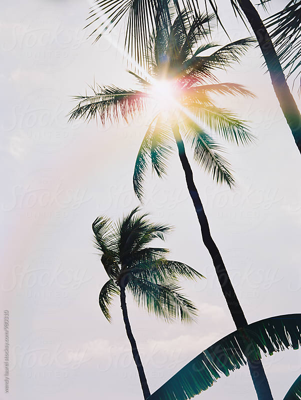 palm tree with sunflare and rainbow by wendy laurel for Stocksy United