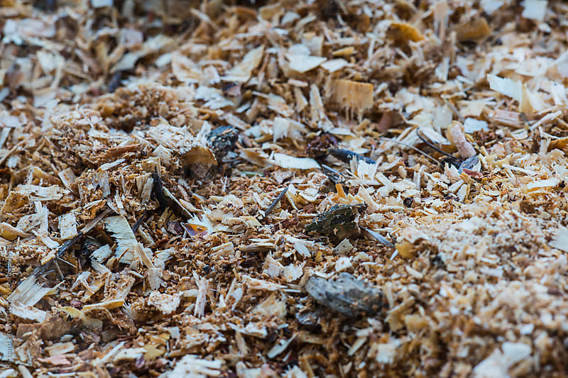 A pile pf wood chips by Richard Brown for Stocksy United