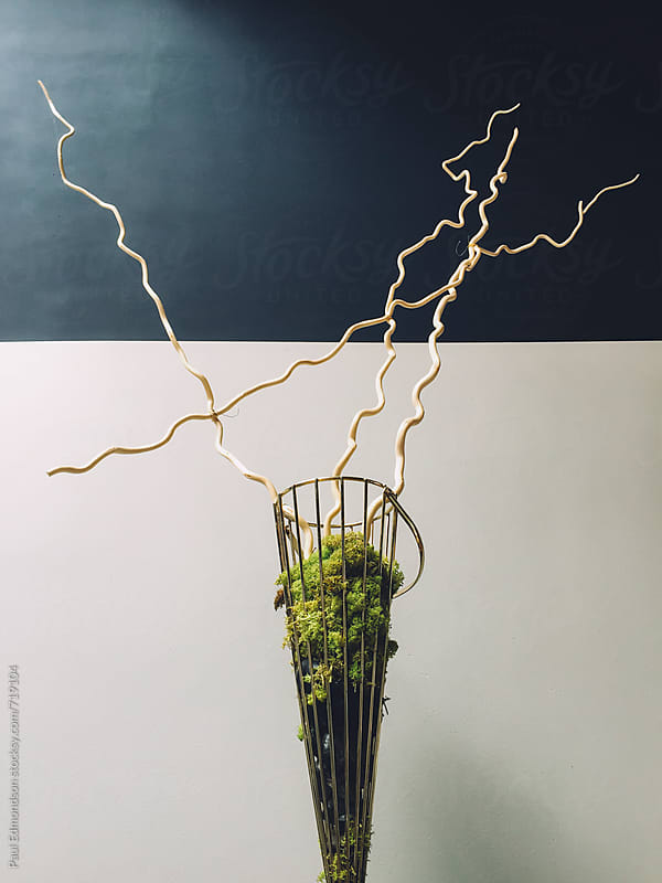 Tree branches in modern vase by Paul Edmondson for Stocksy United