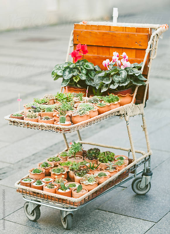 Flower Trolley by Lumina for Stocksy United