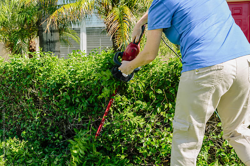 A women trimming a hedge by Adam Nixon for Stocksy United