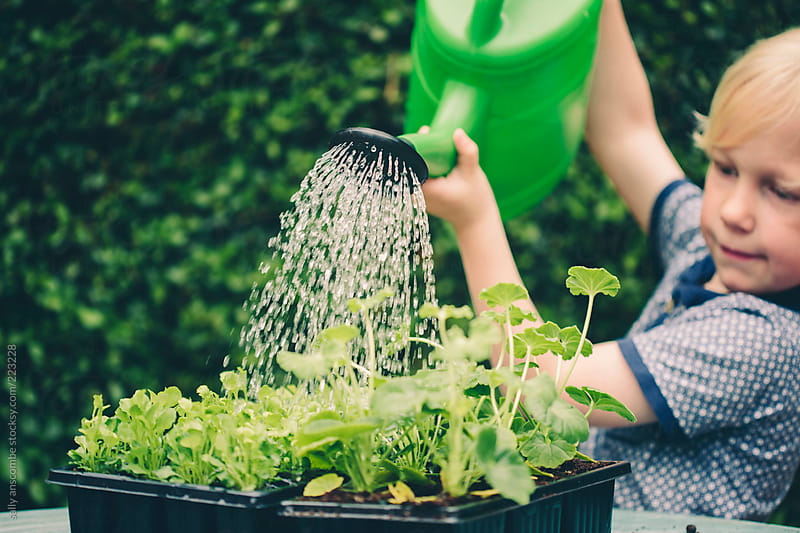 Child Watering Plants By Sally Anscombe Stocksy United