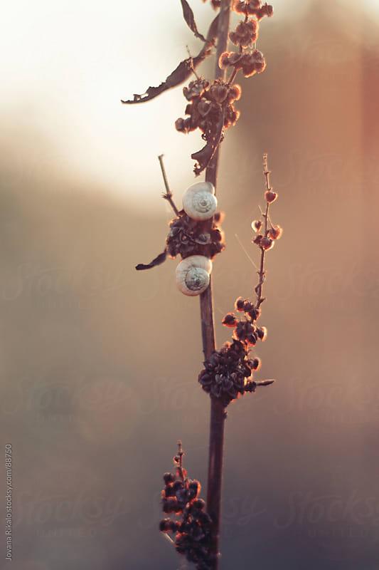 snails  by Jovana Rikalo for Stocksy United
