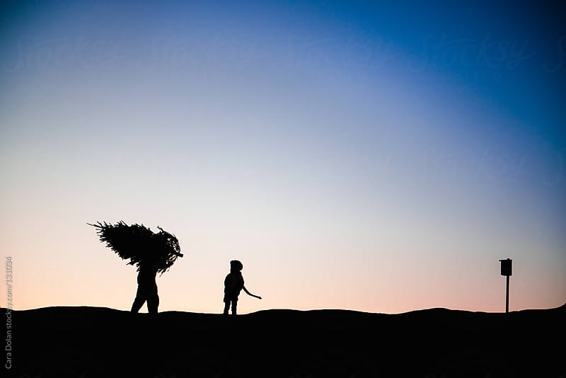 Father and child walk through a field with a freshly-cut Christmas tree by Cara Dolan for Stocksy United