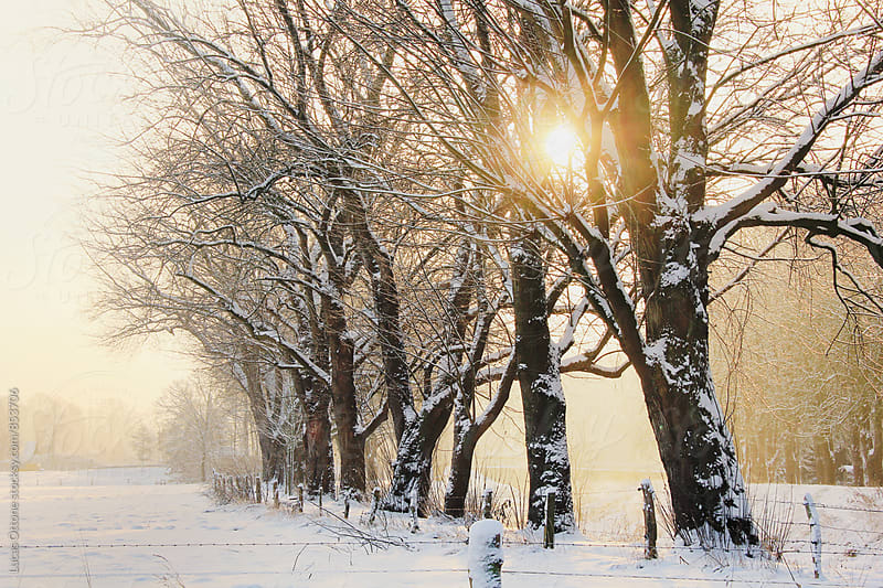 Line of trees in a snowy landscape by Lucas Ottone for Stocksy United