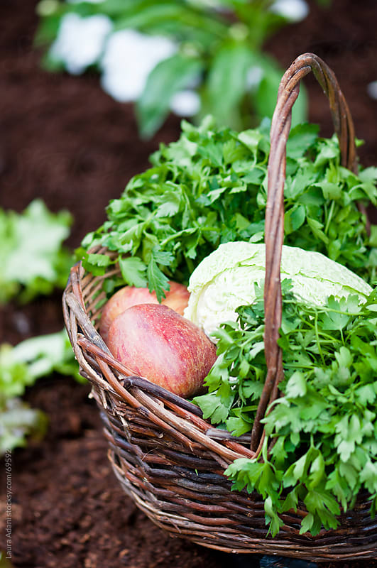 parsley, apples and cabbage in a wicker basket by Laura Adani for Stocksy United