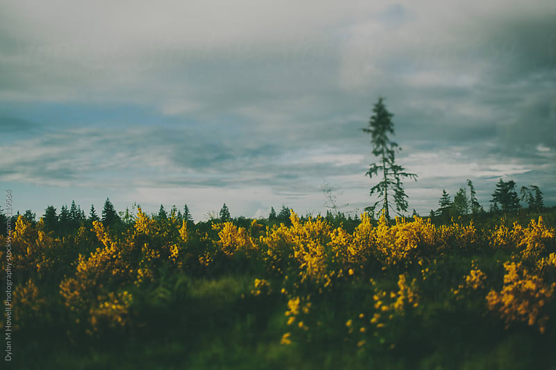 Lone Trees by Dylan M Howell Photography for Stocksy United