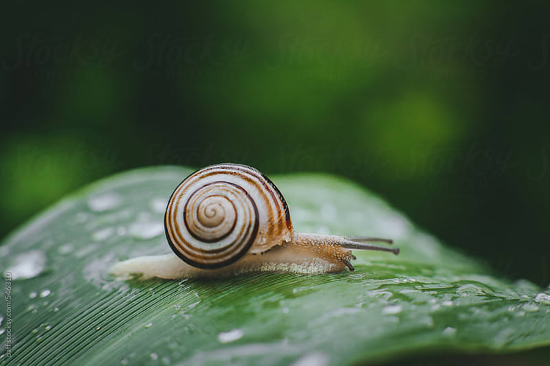 Snail on a flower's leaf by paff for Stocksy United