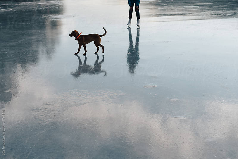puppy on ice with young lady skating by Léa Jones for Stocksy United