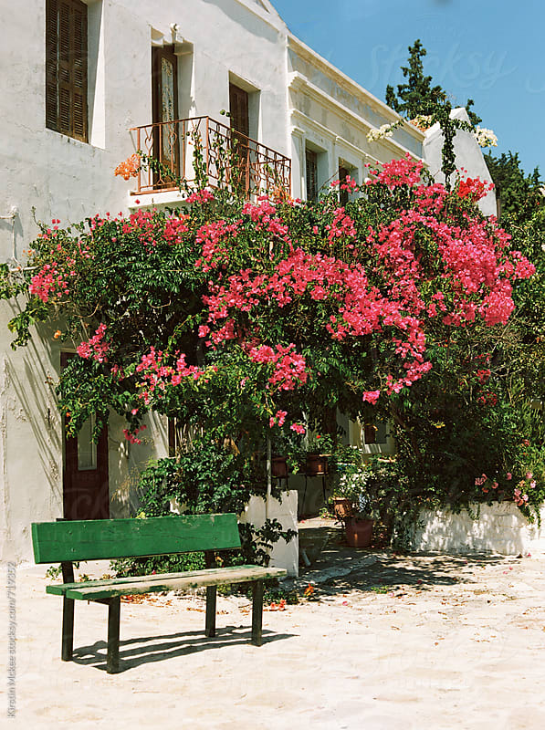 Bench in front of a bougainvillea tree in Kastellorizo by Kirstin Mckee for Stocksy United