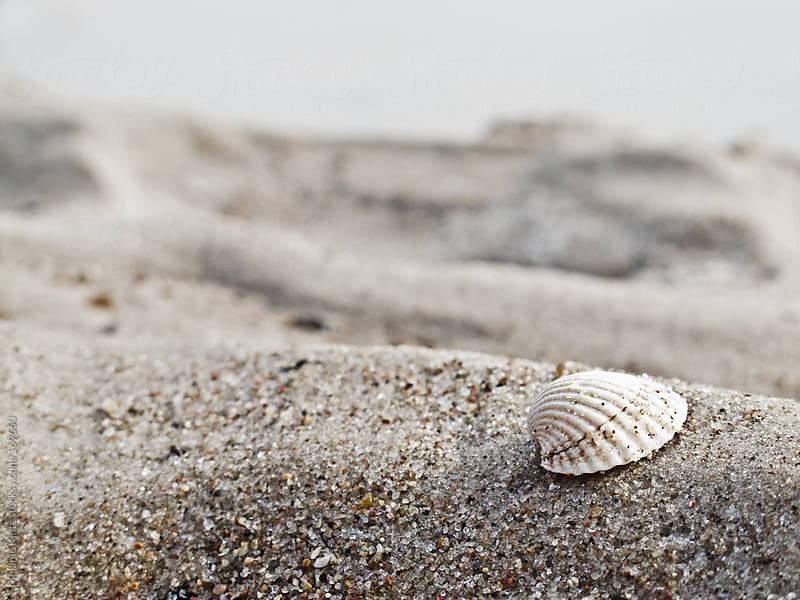 Small shell on sand at the beach by Melanie Kintz for Stocksy United