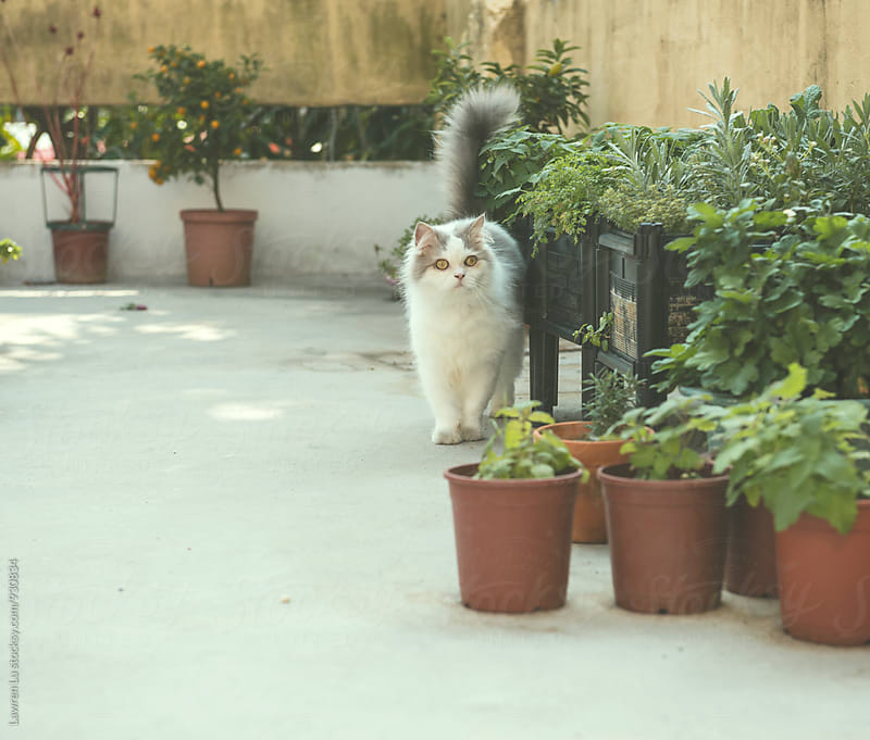 Curious cat walking near plants by Lawren Lu for Stocksy United