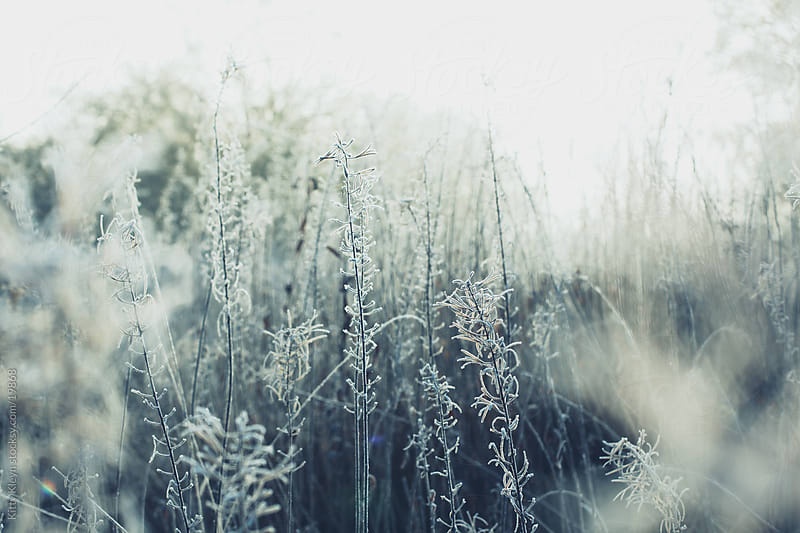 Frozen grass by Kitty Kleyn for Stocksy United