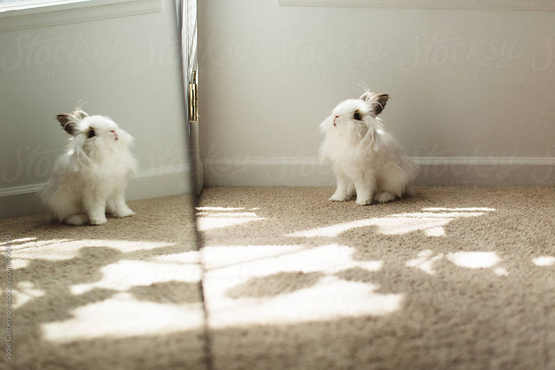 Bunny reflection by Sadie Culberson for Stocksy United