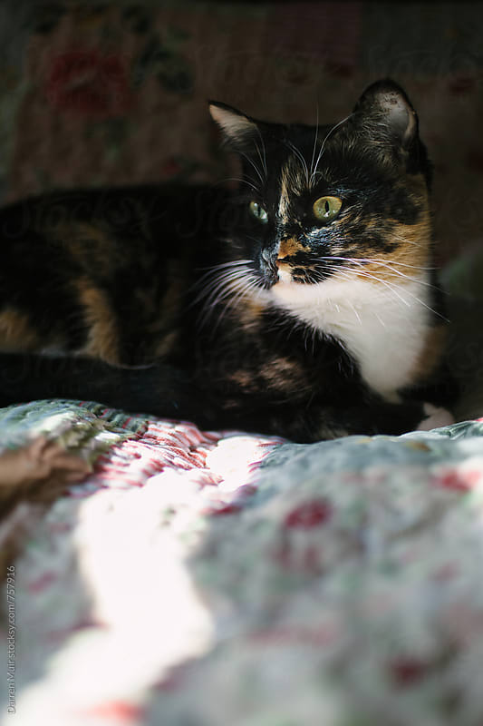 Cat relaxing on the bed in a patch of sun light.  by Darren Muir for Stocksy United