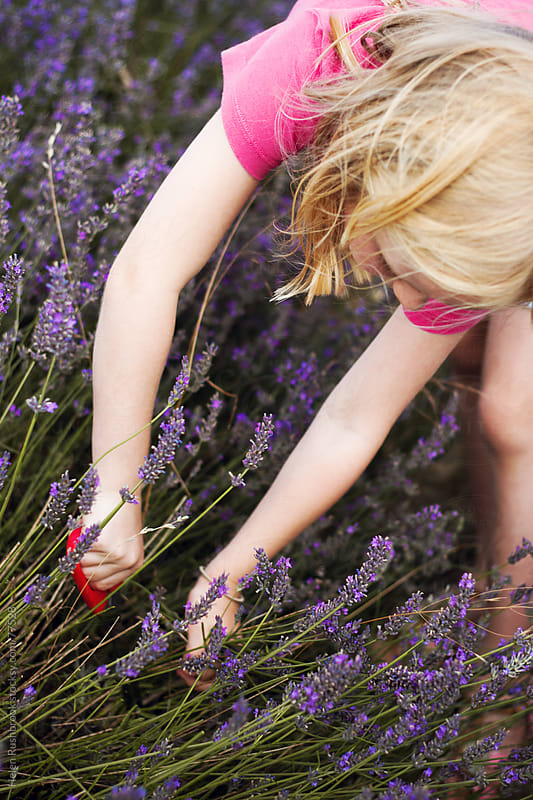 A little girl cutting lavender by Helen Rushbrook for Stocksy United