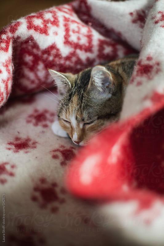 Tabby cat sleeping in wintry blanket by Laura Stolfi for Stocksy United