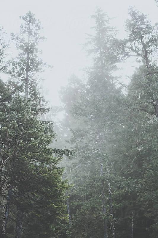 Fog by Luke Gram for Stocksy United