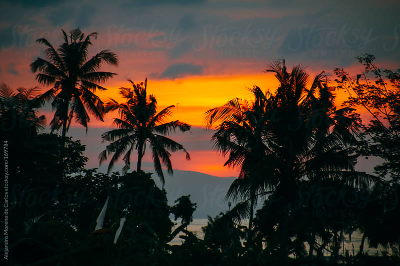 Palm trees on tropical island at sunset by Alejandro Moreno de Carlos for Stocksy United