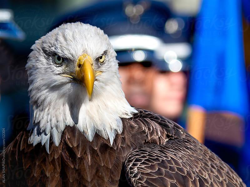 Bald Eagle by alan shapiro for Stocksy United