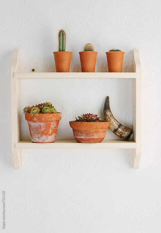 Cactus, succulent plants and a horn on a shelf by kkgas for Stocksy United