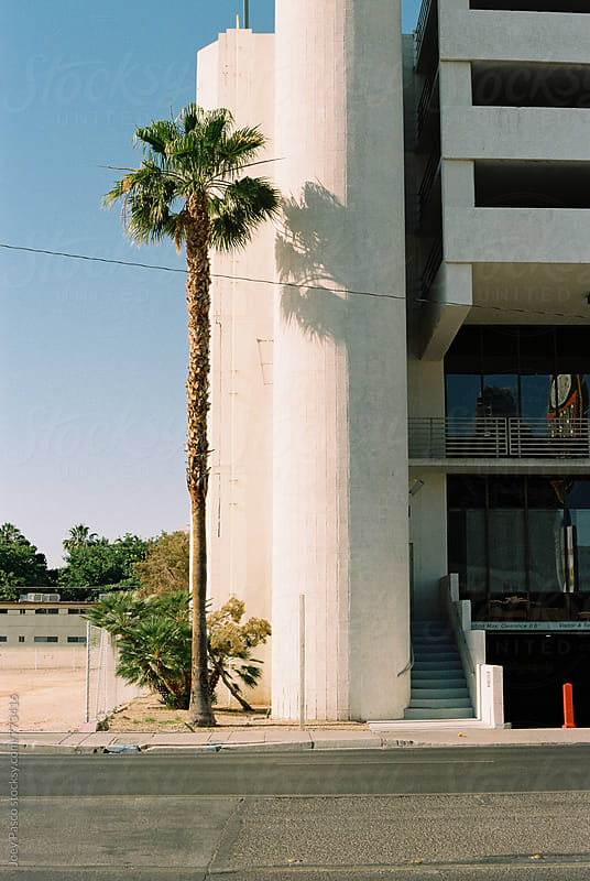 Lone palm tree in urban street in Las Vegas by Joey Pasco for Stocksy United