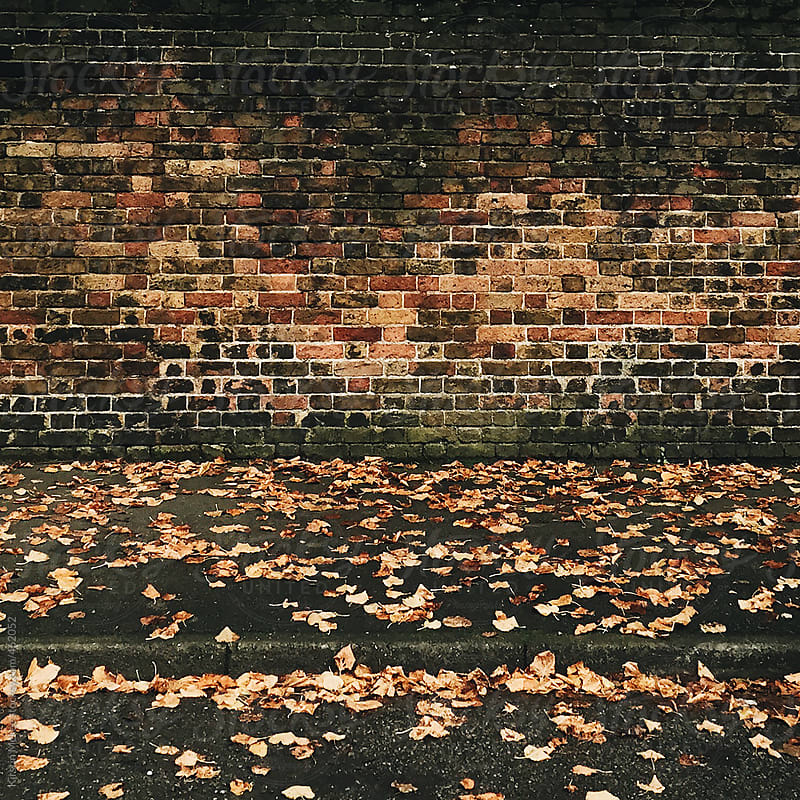 Fallen leaves next to a wall by Kirstin Mckee for Stocksy United