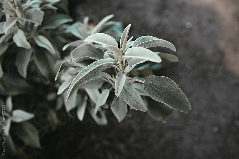 light green plant in garden by Nicole Mason for Stocksy United