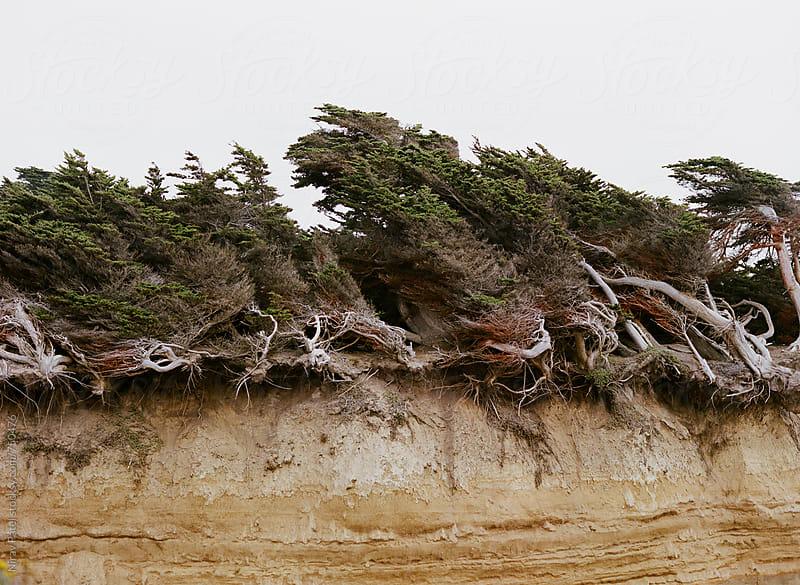 Half Moon Bay Cliffside. by Nirav Patel for Stocksy United