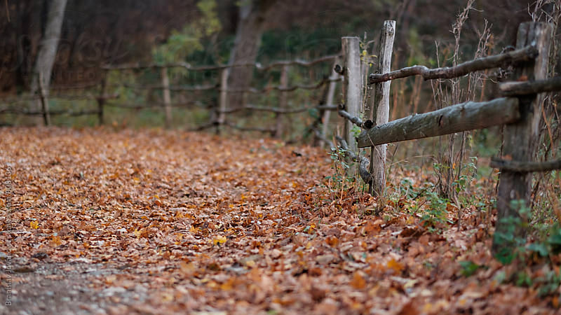 Path Covered with Leaves by Branislav Jovanović for Stocksy United