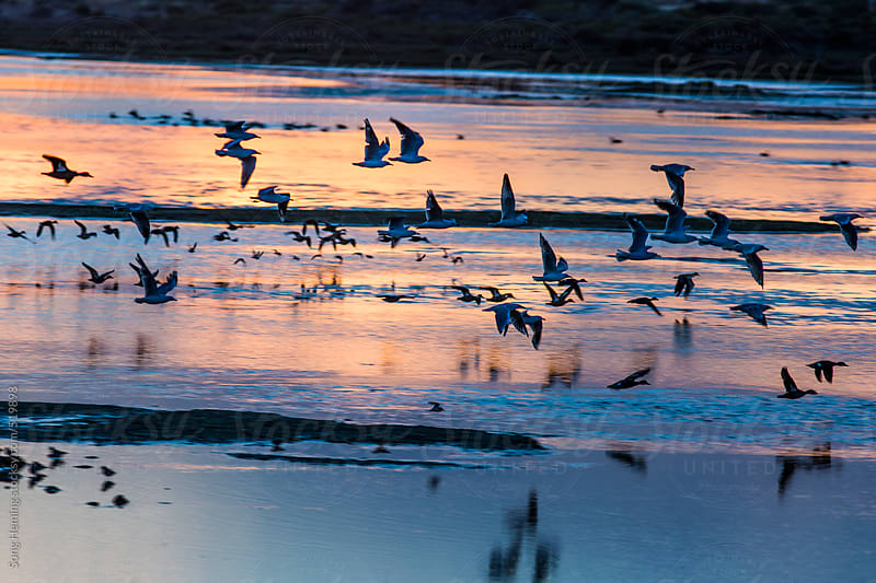 birds at sunset by Song Heming for Stocksy United