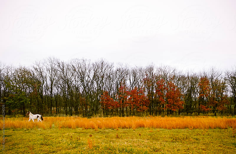 horse in fall foliage by Tod Kapke for Stocksy United