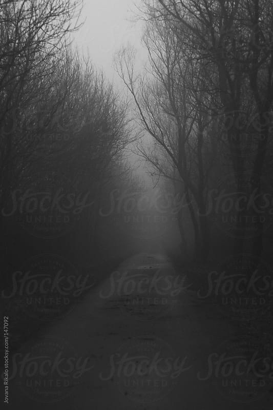 Road covered with fog at the morning by Jovana Rikalo for Stocksy United