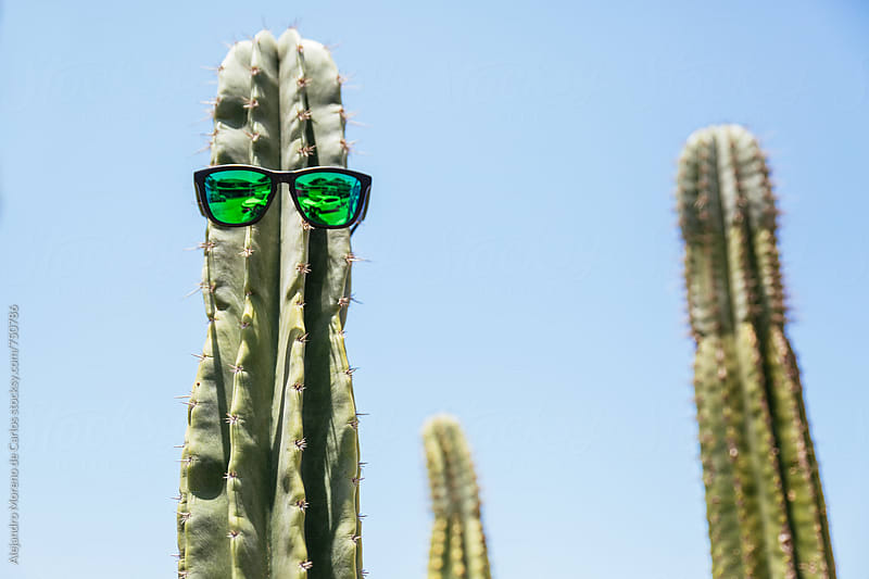 Cactus with sunglasses by Alejandro Moreno de Carlos for Stocksy United