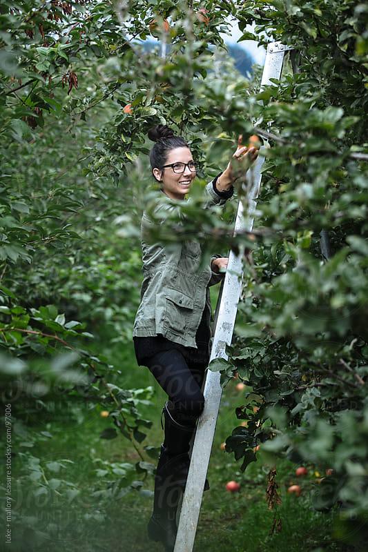Girl Standing on Ladder Picking Apples by luke + mallory leasure for Stocksy United