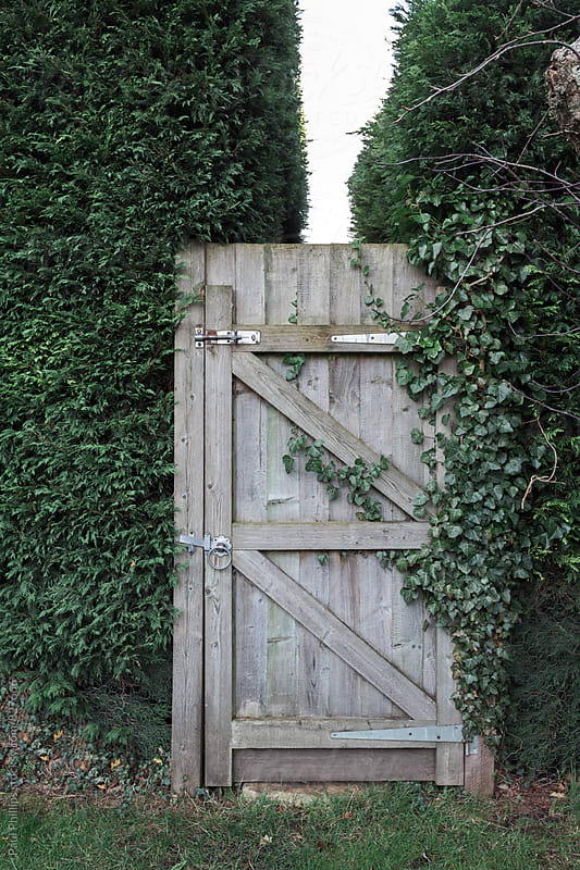 Closed garden gate between tall garden hedge. by Paul Phillips for Stocksy United