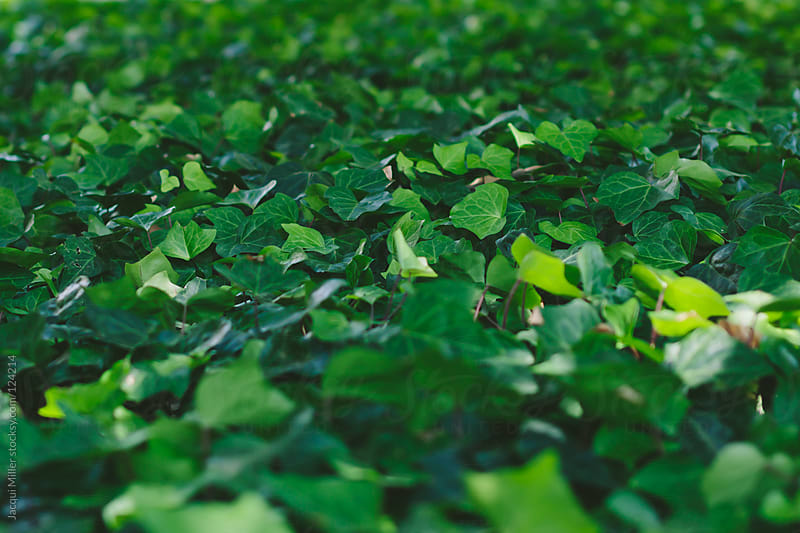 Lush green ground cover by Jacqui Miller for Stocksy United