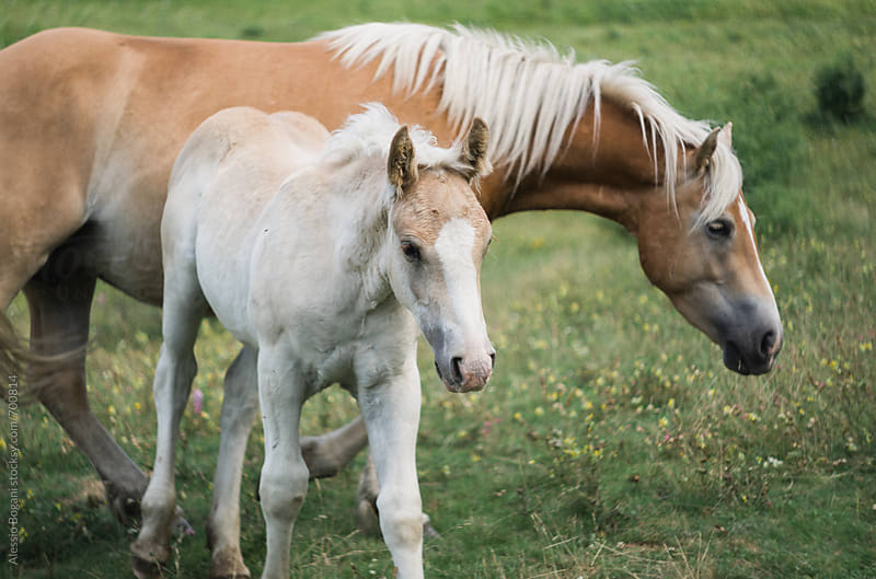Foal and adult horse by Alessio Bogani for Stocksy United