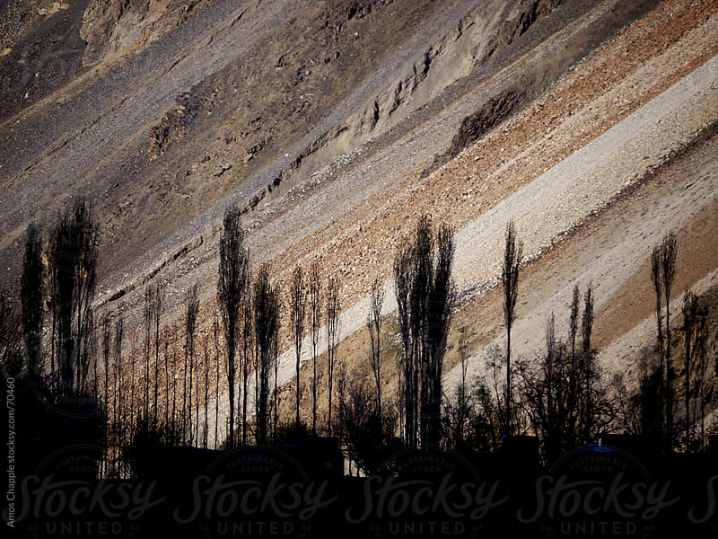 The treeline of an Afghan village seen from Tajikistan.  by Amos Chapple for Stocksy United