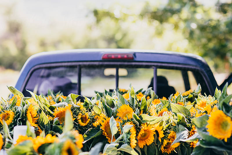 Fresh flowers in pickup truck by Lior + Lone for Stocksy United