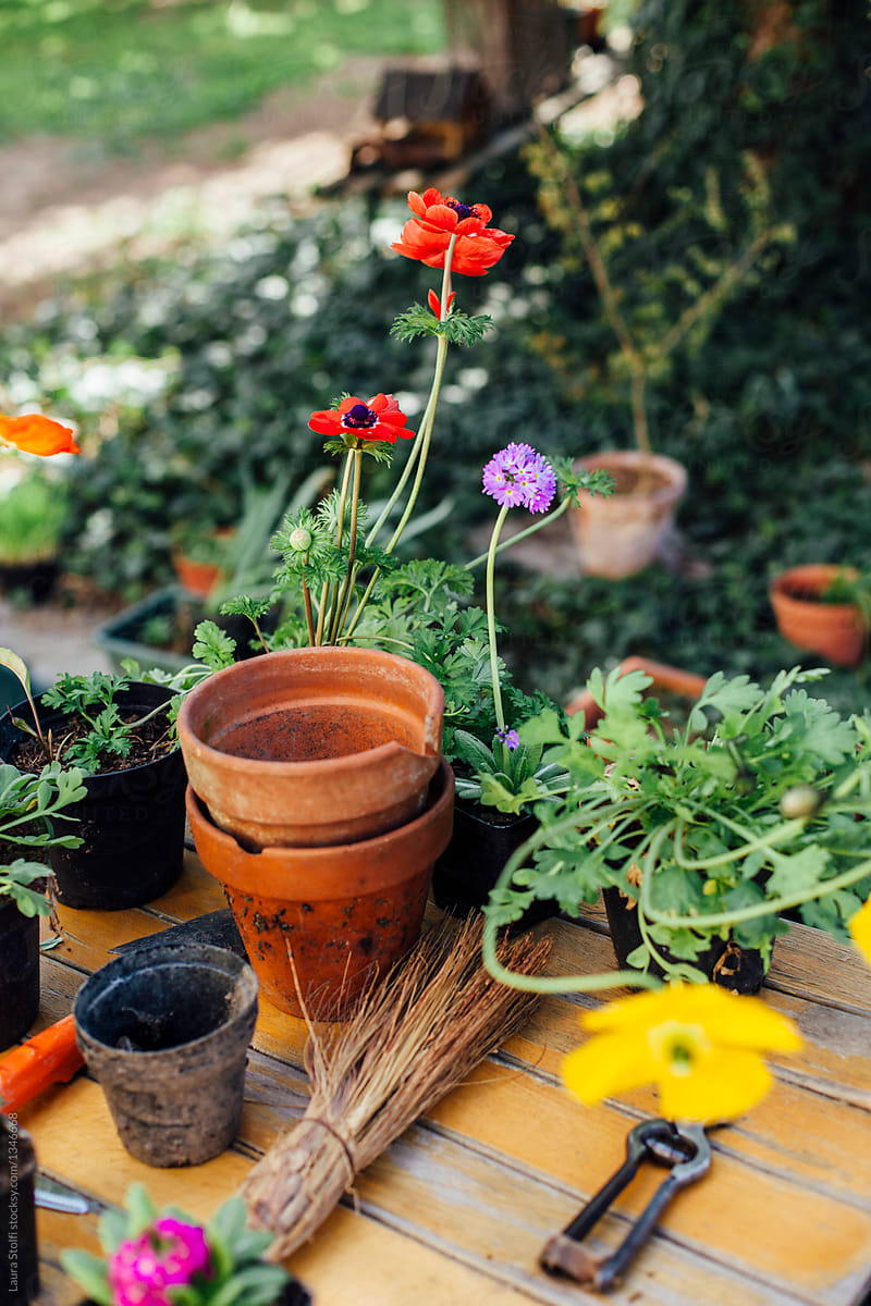 Potting Flowers In Spring Garden Stocksy United