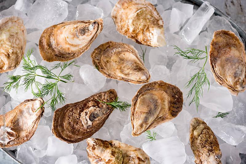 Raw Oysters by Jeff Wasserman for Stocksy United