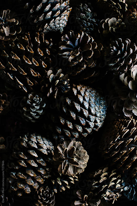 Pine cone background. by Darren Muir for Stocksy United