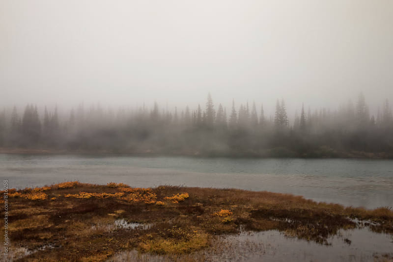 foggy lake in Mount Rainer national park Washington by Tod Kapke for Stocksy United