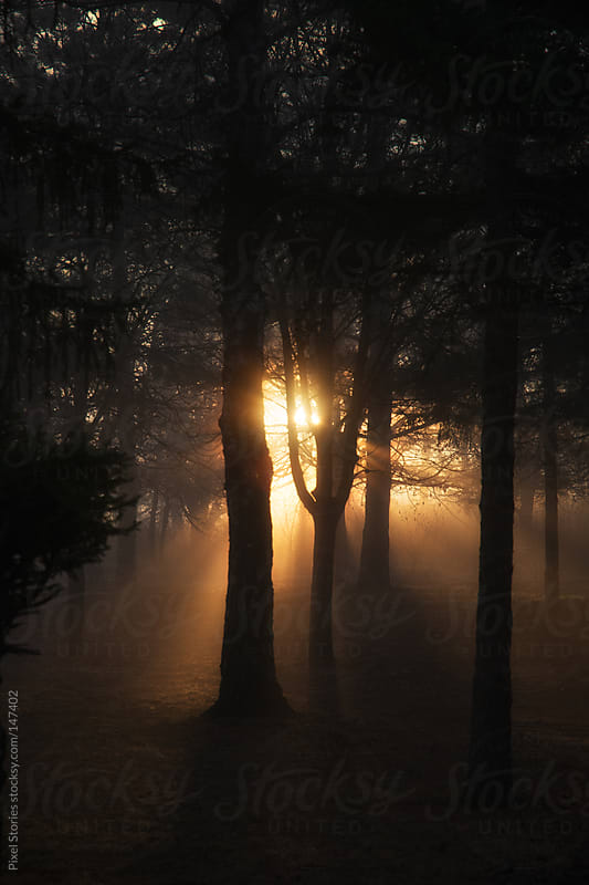 Sunrise in forest by Pixel Stories for Stocksy United