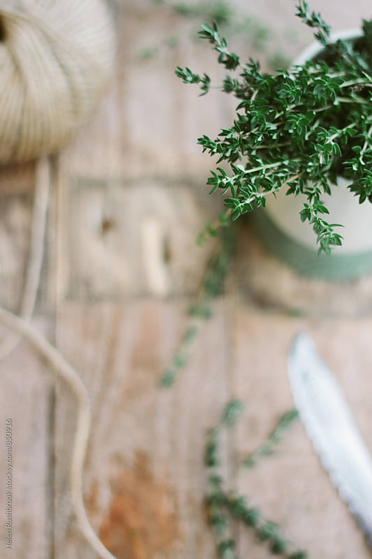 Thyme stems in a jug on a table. by Helen Rushbrook for Stocksy United