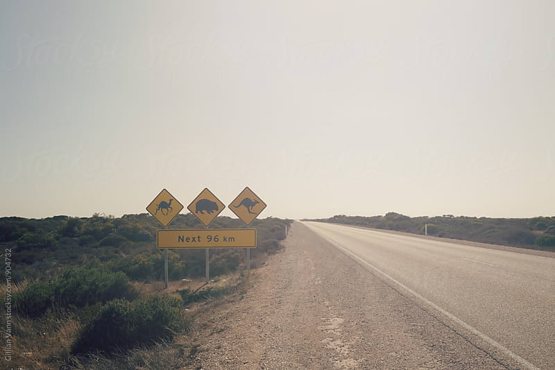 road sign in Australia warning of camels, wombats and kangaroos by Gillian Vann for Stocksy United